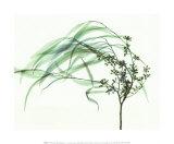 Wind Kunst van Steven N. Meyers