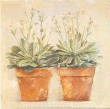Echeveria Affiches par Laurence David