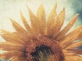 Sunflower Photographic Print by Jennifer Kennard