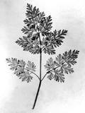 Still Life of Leaf  1844