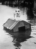 Dog Floating on Doghouse Fotografisk trykk av  Bettmann
