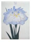 U-Chu Book of a Light Blue Iris Giclee Print by  Stapleton Collection