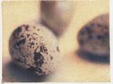 Quail Eggs Photographic Print by Jennifer Kennard