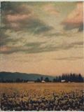 Skagit Daffodils No.2 Photographic Print by Jennifer Kennard