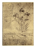 Drawing of Flowers and Diagrams by Leonardo da Vinci Impressão giclée por  Bettmann