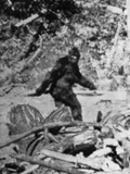 Angebliches Foto von Bigfoot Fotografie-Druck von  Bettmann