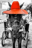 ¡Viva Mexico! B&W Collection - Horse with Red straw Hat Fotoprint van Philippe Hugonnard
