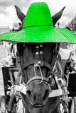 ¡Viva Mexico! B&W Collection - Portrait of Horse with Green Hat Premium fotoprint van Philippe Hugonnard