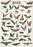 Breeds Of Bats (Italian) Plakat