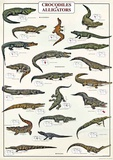Crocodiles And Alligators Of The World Poster
