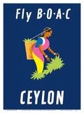 Ceylon (Sri Lanka) - BOAC (British Overseas Airways Corporation) - Sri Lankan Tea Picker Prints by  Dick Negus & Philip Sharland