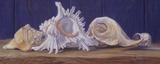 Shells I Art by Lucie Bilodeau