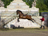 Lusitano Horse, Man Training Stallion In Dressage Steps, The High Leap Toile tendue sur châssis par Carol Walker