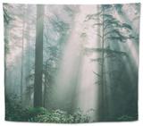 Divine Forest Light, Del Norte Coast Redwoods, Northern California Tapestry by Vincent James