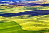 Yellow Green Wheat Fields Black Dirt Fallow Land from Steptoe Butte at Palouse, Washington State Fotografisk trykk av William Perry
