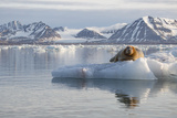 Norway, Svalbard. Bearded Seal Resting on Ice Fotografie-Druck von Jaynes Gallery