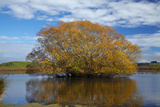 Willow Tree, Lake Tuakitoto, Near Benhar, South Otago, South Island, New Zealand Photographic Print by David Wall