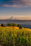 Washington State, Lyle. Mt. Hood Seen from a Vineyard Along the Columbia River Gorge Fotoprint van Richard Duval