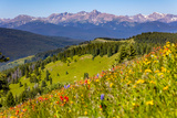 Colorado, Shrine Pass, Vail. Wildflowers on Mountain Landscape Photographic Print by Jaynes Gallery