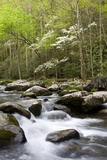 Dogwood Trees in Spring Along Little River, Great Smoky Mountains National Park, Tennessee Reproduction photographique par Richard and Susan Day