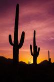 Saguaro Cactus at Sunrise under Gates Pass, Tucson Mountain Park, Arizona Reproduction photographique Premium par Russ Bishop