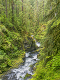 Washington State, Olympic National Park. Landscape with Sol Duc River Fotoprint van Jaynes Gallery