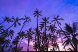 Palm Trees at Sunset, Pu'Uhonua O Honaunau National Historic Park, Kona Coast, Hawaii Reproduction photographique par Russ Bishop
