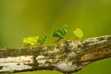 Central America, Costa Rica, Monteverde Cloud Forest Biological Reserve Fotoprint van Jaynes Gallery