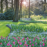 Sunlit Woodland Garden with Tulips Impressão fotográfica por Anna Miller
