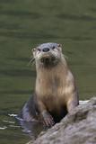 River Otter Fotografie-Druck von Ken Archer