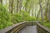 Washington State, Sandpiper Trail Boardwalk in Alder Tree Grove Reproduction photographique par Trish Drury