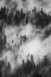 California. Yosemite National Park. Black and White Image of Pine Forests with Swirling Mist Photographic Print by Judith Zimmerman