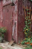 Outhouse Garden Shed Nasturtium Tropaeoium Majus and Thunbergia Lemon Star Reproduction photographique par Richard and Susan Day