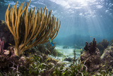 Sunlight Illuminates Soft and Hard Corals and Blue and Clear Waters, Cuba Reproduction photographique par James White