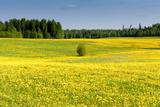 Fields at Varska, Estonia, Baltic States Photographic Print by Nico Tondini