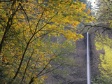 Or, Columbia River Gorge, Latourell Falls, 249 Foot Waterfall Reproduction photographique par Jamie And Judy Wild
