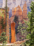Utah, Bryce Canyon National Park, Bryce Canyon and Hoodoos Along Peekaboo Loop Trail Reproduction photographique par Jamie And Judy Wild