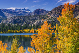 Golden Fall Aspen at June Lake, Inyo National Forest, Sierra Nevada Mountains, California, Usa Reproduction photographique par Russ Bishop