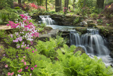 Waterfall with Ferns and Azaleas at Azalea Path Arboretum and Botanical Gardens, Hazleton, Indiana Fotografie-Druck von Richard and Susan Day