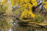 Alfred Caldwell Lily Pond in Chicago's Lincoln Park Area Photographic Print by Alan Klehr