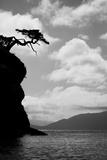 Washington State, San Juan Islands. Weathered Fir Tree Silhouette on Matia Island Lámina fotográfica por Jaynes Gallery