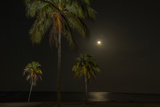 Moon over the Horizon Off the Isle of Youth, Cuba. Coconut Palms Illuminated in the Foreground Reproduction photographique par James White