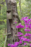 Birdhouse and Azaleas, Azalea Path Arboretum and Botanical Gardens, Hazleton, Indiana Reproduction photographique par Richard and Susan Day