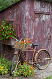 Old Bicycle with Flower Basket Next to Old Outhouse Garden Shed Bedruckte aufgespannte Leinwand von Richard and Susan Day