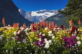 Flowers at Lake Louise under Mount Victoria, Banff National Park, Alberta, Canada Reproduction photographique par Russ Bishop