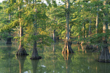 Bald Cypress Trees at Horseshoe Lake Cons. Area, Illinois Reproduction photographique par Richard and Susan Day
