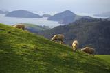 Coromandel Peninsula, North Island, New Zealand Reproduction photographique par Paul Dymond