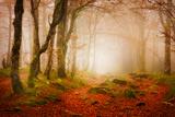 Yellow Forest Mist Fotografie-Druck von Philippe Sainte-Laudy