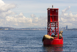Us, Wa, Seattle. California Sea Lions Relax in Sun on Channel Marker Buoy Reproduction photographique par Trish Drury