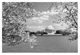 Jefferson Memorial with cherry blossoms, Washington, D.C. - Black and White Variant Posters by Carol Highsmith